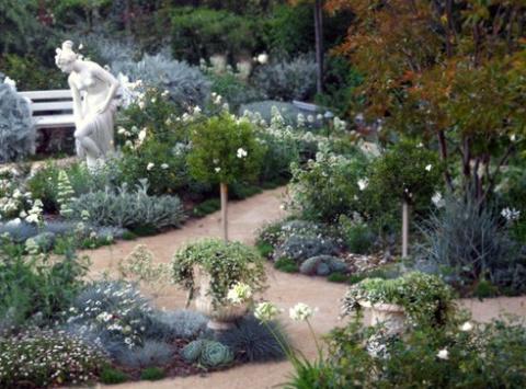 Серебристые цветы для лунного сада