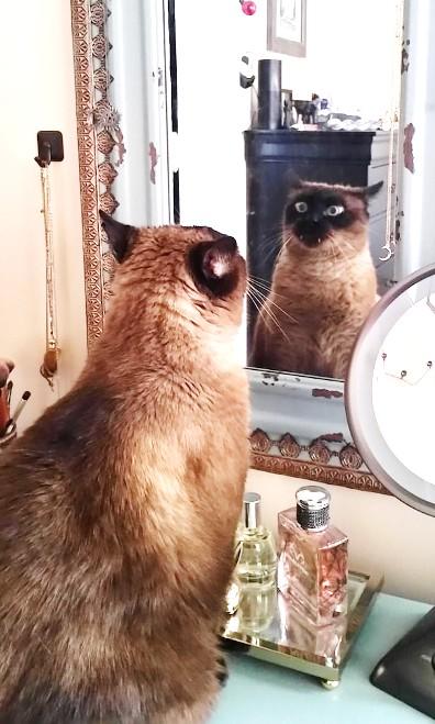 Неопровержимые фотодоказательства того, что коты — точно звери с причудами