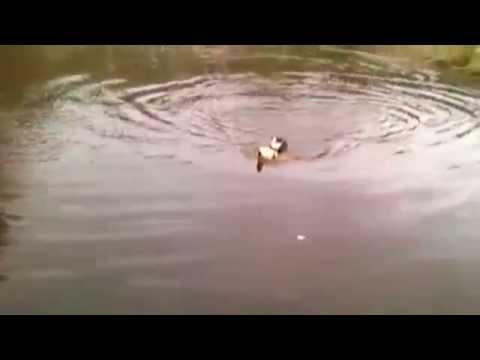 Кот упал в реку и пока человек снимал это на видео, помощь пришла от туда, откуда ее меньше всего ждали!