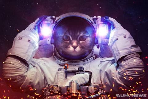 Кошки — являются проводникам…