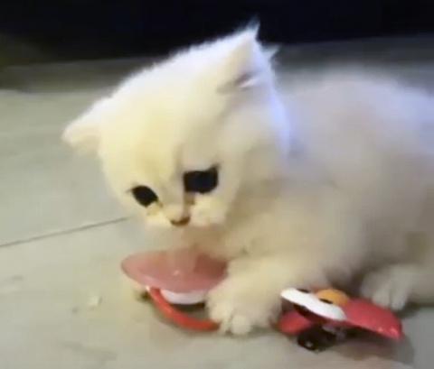 Позитив на весь день: забавный котёнок забрал соску у малыша и не хочет её отдавать