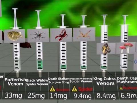 Сравнение токсичности: сколько понадобится продуктов, укусов животных и прочих ядов, чтобы вас убить