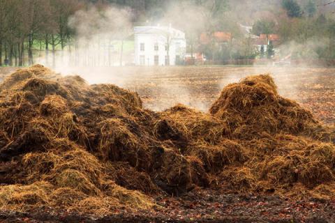 Не все органические удобрения полезны. Нужны ли почве сапропель, навоз и перегной?