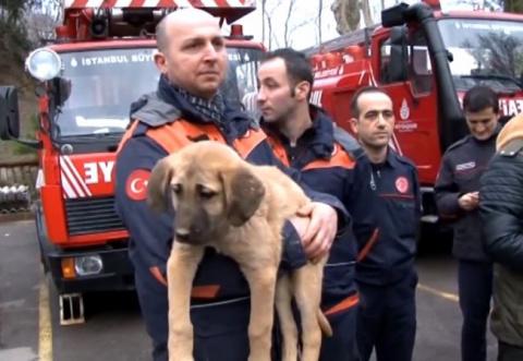 В Турции вытащили щенка из г…