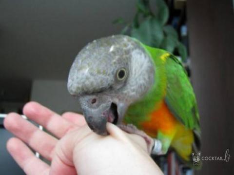 Мужчина засовывает своего попугая в морозилку, чтобы дисциплинировать его. Но он не ожидал, что произойдет затем!