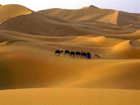 Марокко. Говядина с луком и шафраном