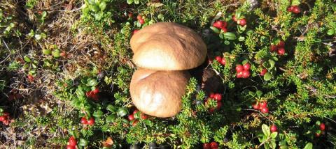"""Пошел за грибами и нашел """"портал"""" в другой мир или иное измерение"""