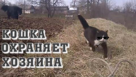 Кошка охраняет хозяина от собаки!