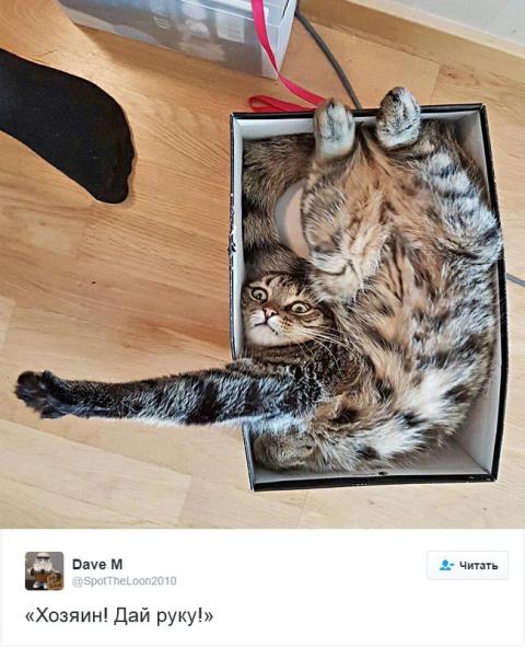 15 кошек, которые взорвали и…