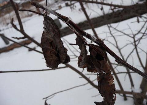 Где зимуют вредители