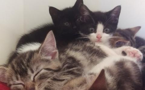 История спасения кошки и кот…