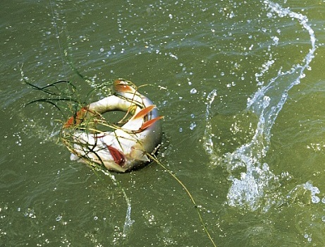 Рыба всегда среди травы