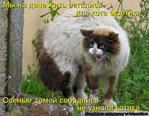 На дачах водятся коты небыва…