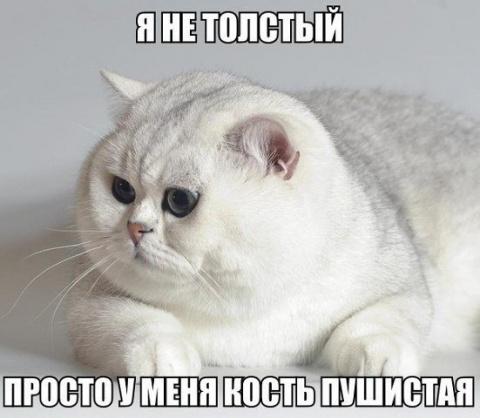 Подборка позитивных кошачьих фоток)