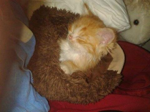 Нашли одинокого котёнка, заблудившегося в лесу.