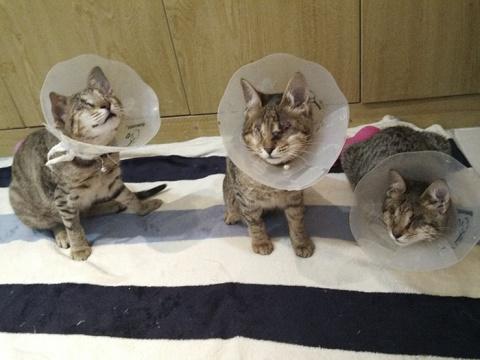 История о том, как три слепых кошки нашли любящий дом