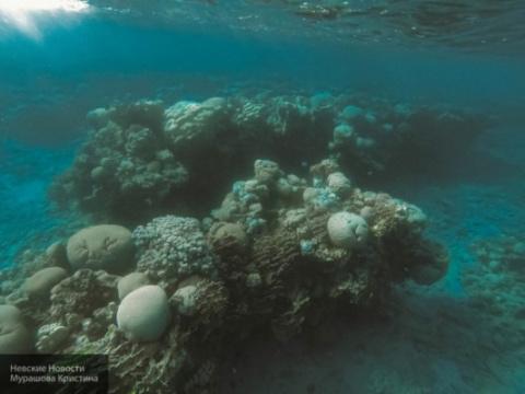 На дне Тихого океана найден …