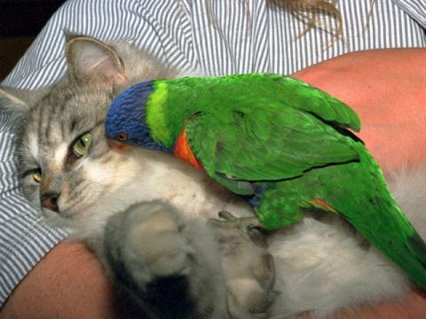 Попугай говорит с котом. Вид…