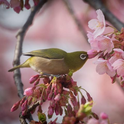 Скромное очарование японской природы