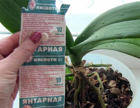 Янтарную кислоту для растений покупаю только в аптеке