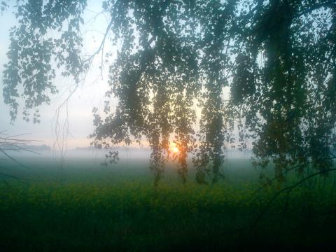 Утро... Туман... Люцерна?..