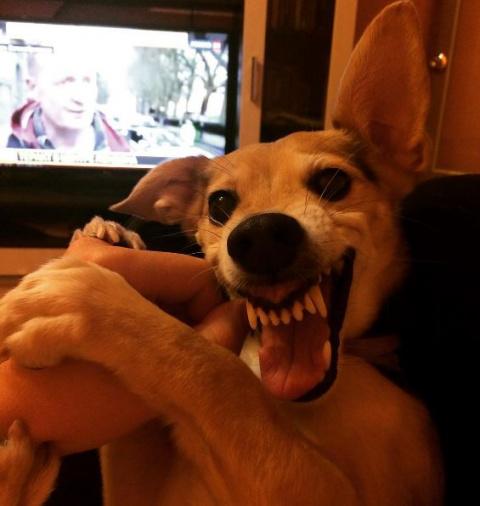 Русский Ла-ла пес взорвал интернет