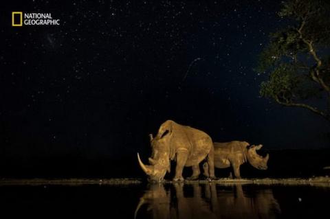 10 потрясающих фотографий ди…