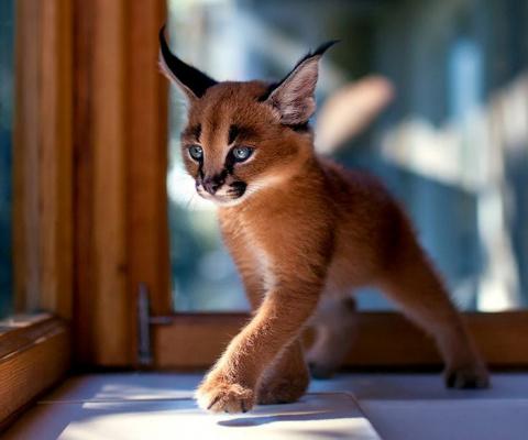 Пушистое чудо: фотографии невероятно красивых котов со всего мира