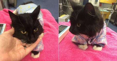Семья спасла кошечку, едва н…