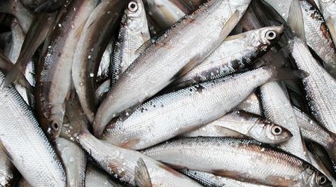 Промышлявшие в Карелии незаконным ловом ряпушки браконьеры отделались условными сроками