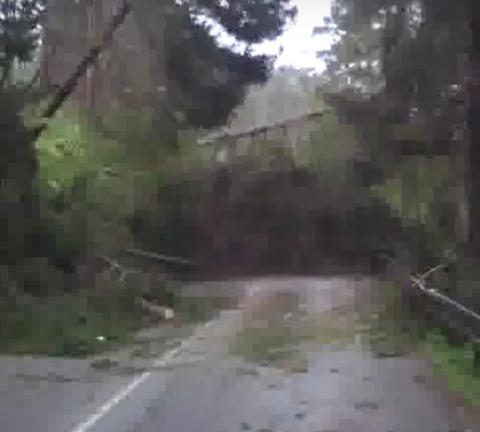 В Словакии деревья внезапно стали падать на дорогу