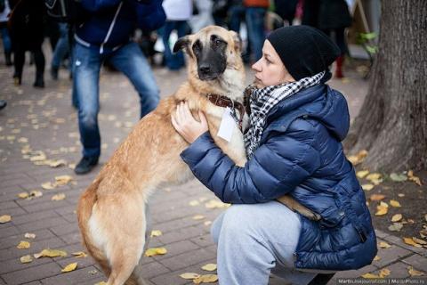 Московские бездомные животны…