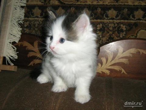 Маленький котенок очень люби…