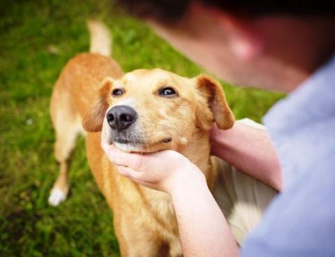 История спасения собаки, кот…