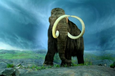 """Дилемма о """"воскрешении"""": возвращение вымерших животных может выйти боком ныне живущим"""