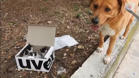 Пес находит заброшенных котят и становится идеальным приемным папой