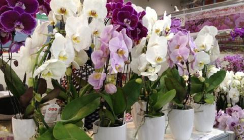Размножение орхидей секретным способом