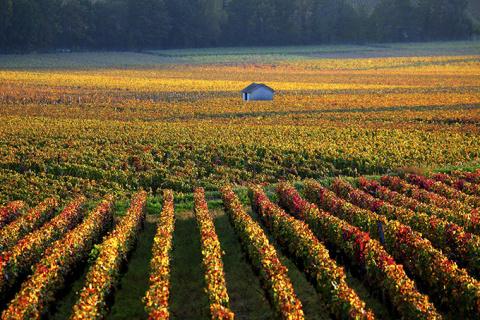 10 стран, куда можно отправиться осенью за лучшим в мире вином