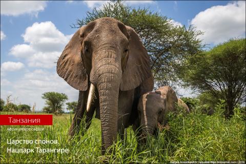 Царство слонов. Национальный…
