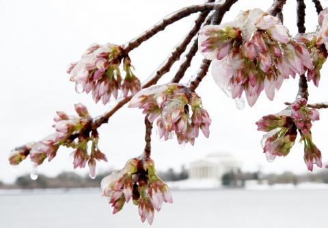 Прощальный подарок зимы в США