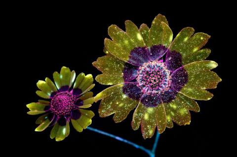 Волшебные фотографии цветов,…