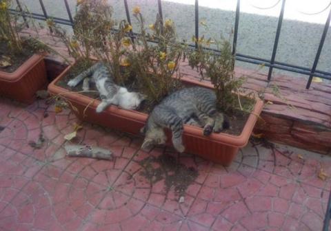 Коты-садоводы, даже когда их…