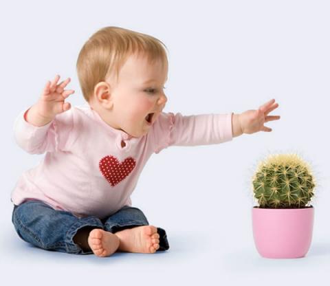 9 самых опасных комнатных растений для детей