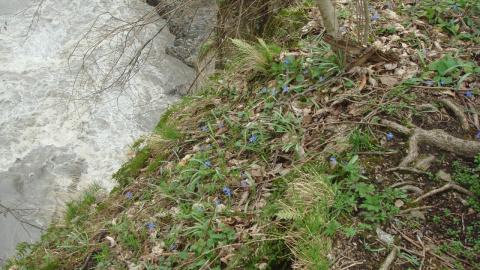 Весна река Белая 15.03.13г