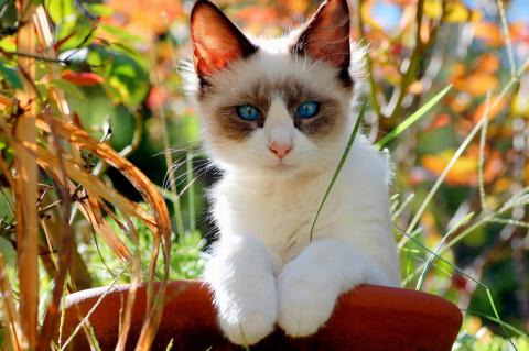 Интересные факты из жизни кошек. Как размножаются аквариумные улитки ампулярии