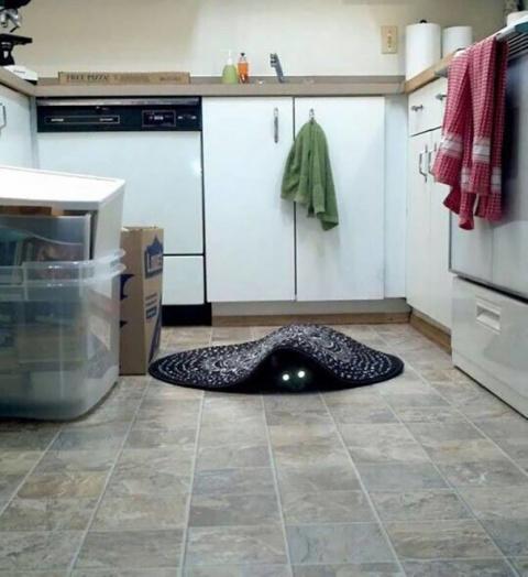 Отличная подборка фото котов…