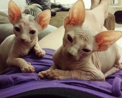 Инопланетные котики