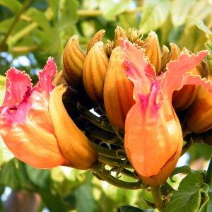 10 необычных растений для дома – создаем экзотический цветник