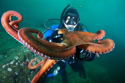 ФОТОЛИКБЕЗ. Советы по созданию подводных фотографий