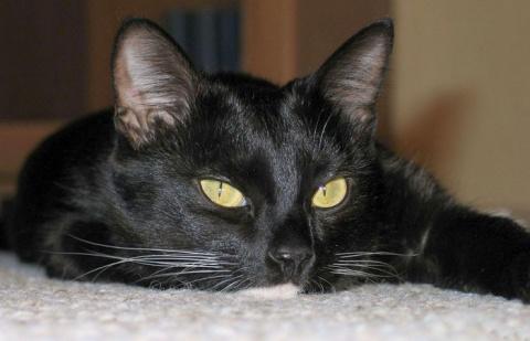 Самые необычные примеры почитания кошек в истории